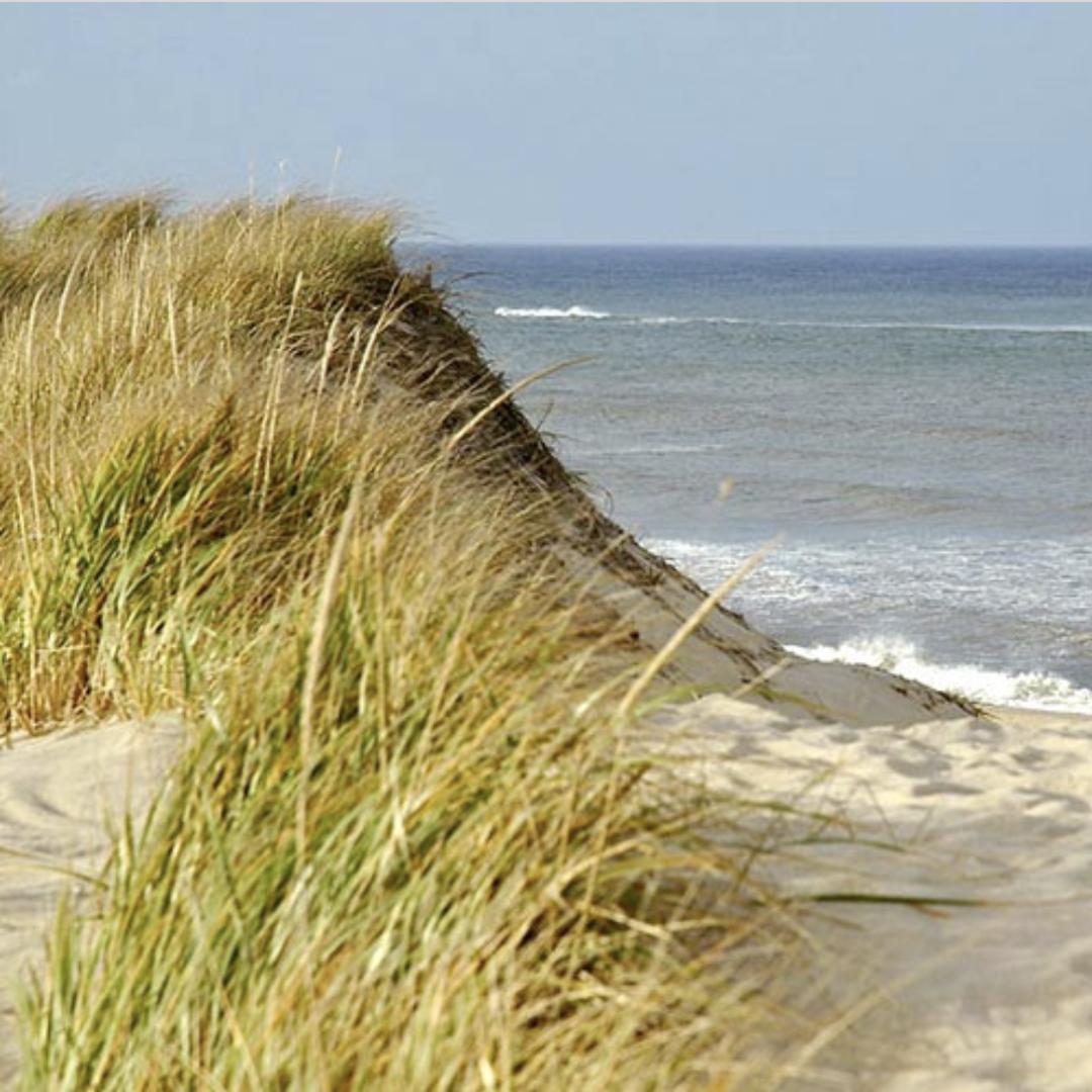 Provincetown Dune Tours